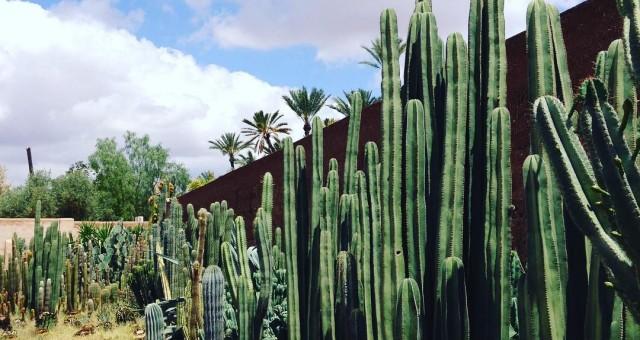 #museepalmeraie #muséepalmeraie #marrakech #garden #gardens #green #nature #cactus #beautiful #morocco